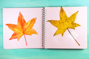 Maple leaf, found and drawn, in sketchbook, with copyspace