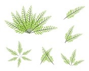 Set of Green Fern on White Background