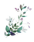 Floral watercolor painting.
