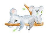 Watercolor illustration of two adorable cartoon koala bears sitting on eucalyptus tree branch