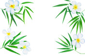 Green bamboo leaves ad plumeria flowers watercolor illustration.