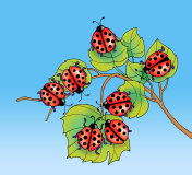 Ladybugs on leaves - jpg illustration