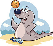 Seal tossing a basketball