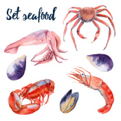 Set of seafood. Crab, shrimp, lobster, mussels and squid.  Isolated on white background. Watercolor illustration.