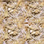 Seamless photo texture of oat flakes