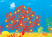 Coral, jellyfish, crawfish and shell