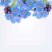 Forget-me-not. Background.