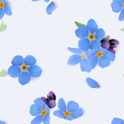 Forget-me-not.Seamless floral pattern.