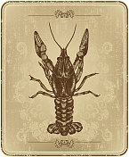 Vintage frame with crayfish, hand drawing