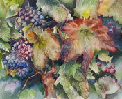 Watercolor Painting of Grapevines