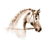 Sepia watercolor horse head with equestrian sport bridle.