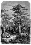 Antique illustration of French forest
