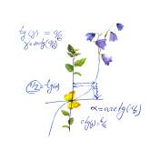 Math design - mathematical graph, flowers. Hand written school concept