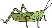 バッタ grasshopper