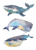 Whales set. Sea animal. Watercolor Hand-painted Illustration Isolated on white background