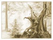 Fairy forest. Sketch illustration