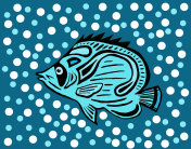 Fish Hand drawn