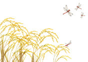 Rice ear and red dragonfly