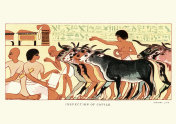 Ancient egyptians inspection of cattle