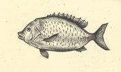 Fish hand drawn retro
