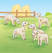 Lambs on The Farm - jpg illustration