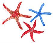 watercolor three starfish
