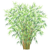 Bamboo branches, vector illustration.