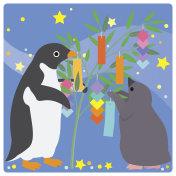 Adelie Penguin/star festival