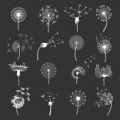 Dandelion flower set