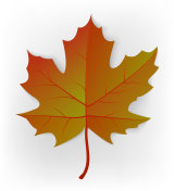 Autumn leaf. Leaf isolated on a white background. Autumn maple leaf. Vector