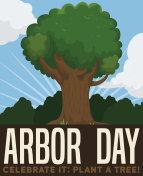 Beautiful Tree View to Celebrate Arbor Day