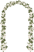 Arch of white climbing roses