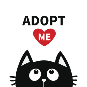 Adopt me. Dont buy. Red heart. Black cat face head silhouette looking up.