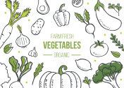 vegetables banner