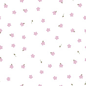 Seamless floral pattern forget-me-not pink flowers. Myosotis gentle flower pattern on white background, vector, eps 10