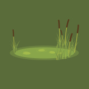 vector illustration of the marsh, reeds and water lilies on a green background