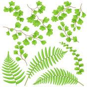 Green Fern Leaves Set