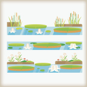 vector of marsh