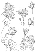 Doodle set of water lilies. Vector Illustration