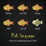 Fish language alphabet - how to understand your fish? - funny fish quotes