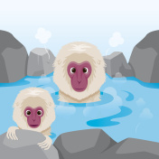 Snow Monkey Relaxing In Hot Spring