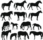 A silhouette of several horses