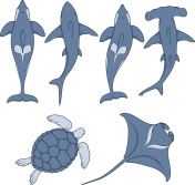 Set of images with marine animals