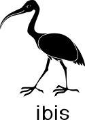 Black cartoon ibis on white background with title