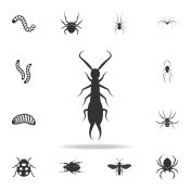 earwig. Detailed set of insects items icons. Premium quality graphic design. One of the collection icons for websites, web design, mobile app