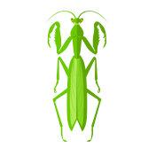 Green Grasshopper Icon
