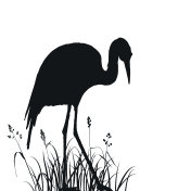 heron in grass silhouette