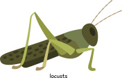 Locusts  - fairly large insect