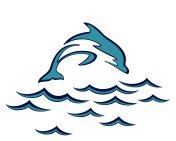 Dolphin in the sea.