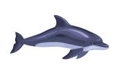 cartoon isolated dolphin